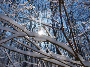 kategorie_winter